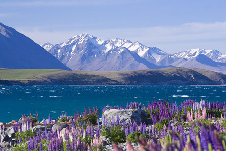 Lake Tekapo ini bagus yaa. foto pinjem dari http://www.laketekapo.com/photo-gallery/lake-tekapo-mountain-biking/