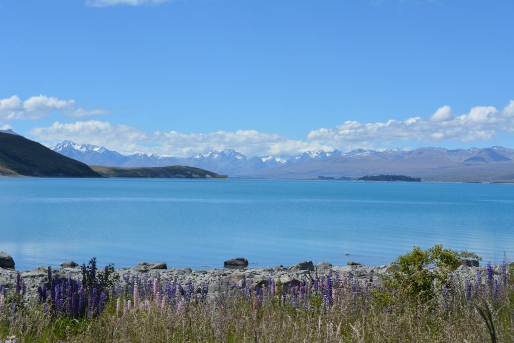 Lake Tekapo. Foto bukan dari internet, tapi langsung dari kameraku yeayyy :-)