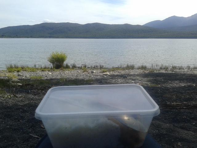 Makan sore di Te Anau