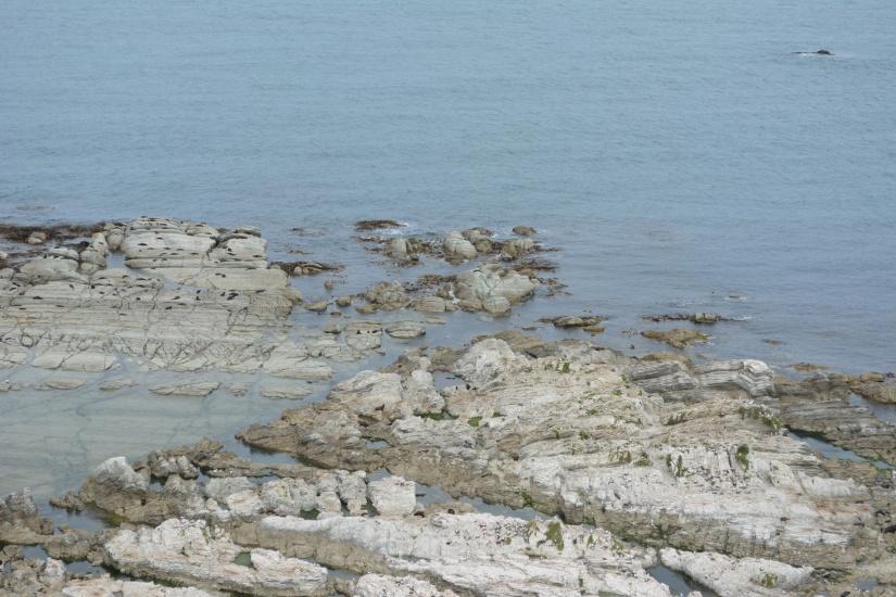 Seals Colony