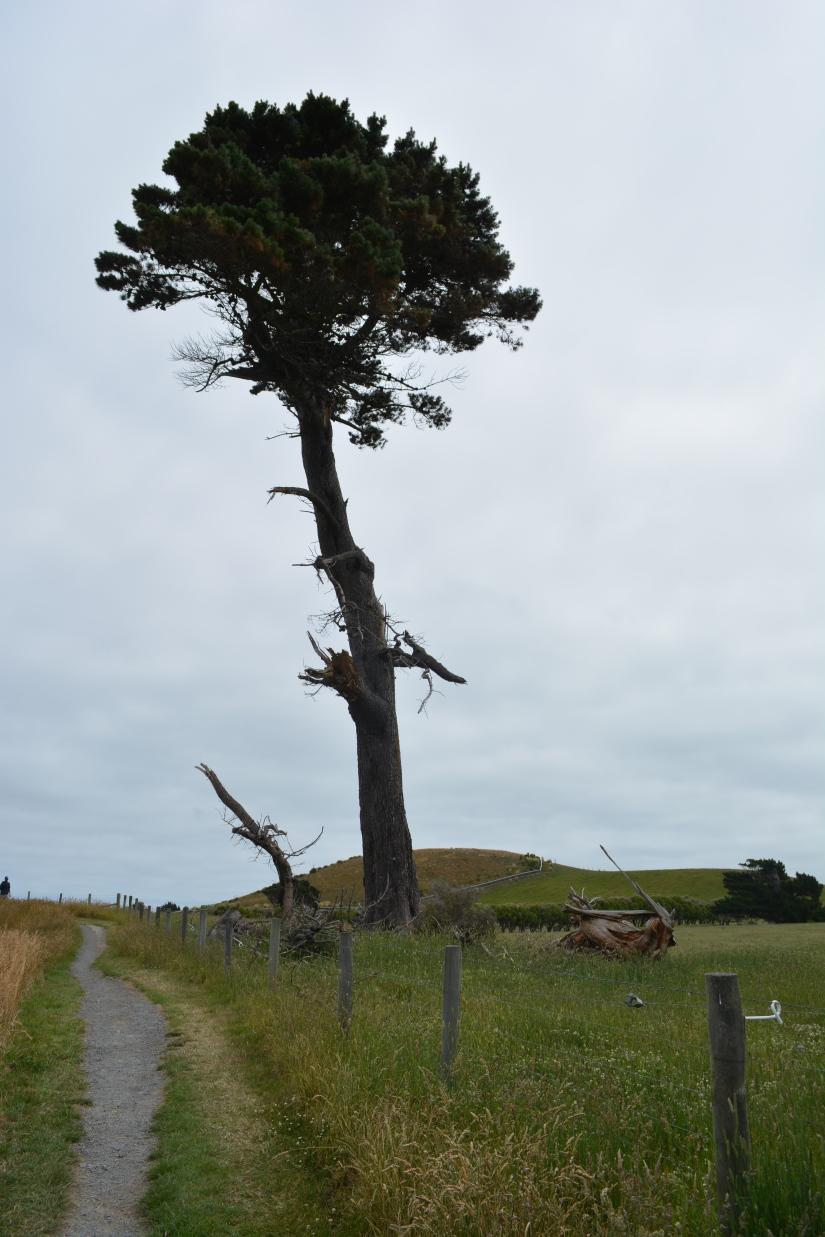 Pohon di atas bukit