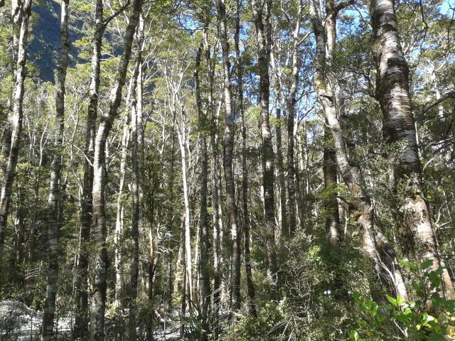 Dikelilingi pohon, pohon, pohon dan pohon. I lovin' it