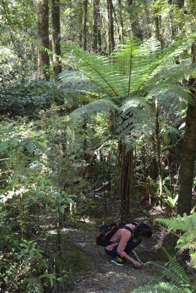 Main di hutan juga sendirian