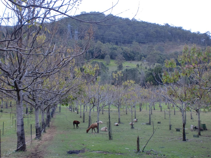Pemandangan di belakang Mount Nathan Winery