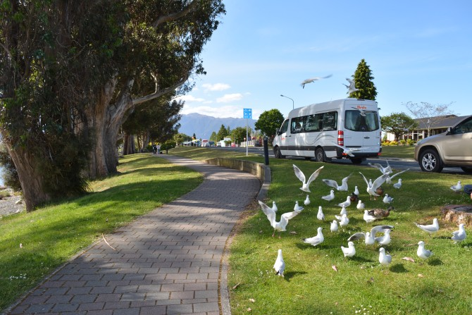 The Birds and Campervan in Te Anau