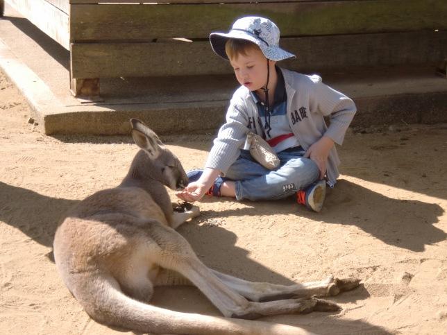 Anak kangguru :-D