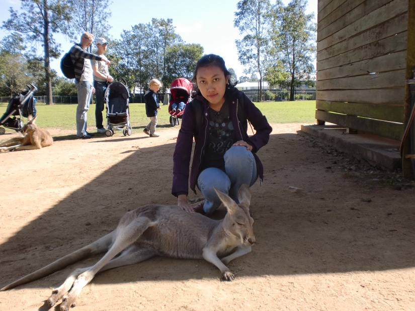 Me and you (kangaroo)